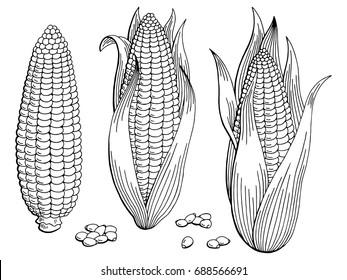 Corn graphic black white isolated sketch illustration vector