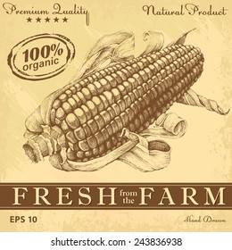 Corn. Hand drawn vintage illustrations