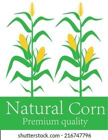 Corn logo. Isolated corn stalk on white background