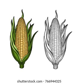 Corn on the cob. Hand-drawn vector illustration isolated on white background.