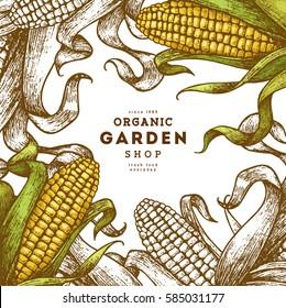 Corn on the cob vintage design template. Botanical corn. Vector illustration