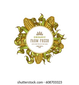 Corn on the cob vintage design template. Botanical corn. Vector illustration