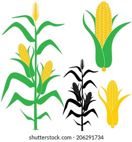 corn stalk images stock photos vectors shutterstock rh shutterstock com corn stalk bundle clipart fall corn stalk clipart