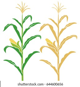 Corn Stalk Images Stock Photos Vectors Shutterstock How to make corn stalk decorations. https www shutterstock com image vector corn stalk vector illustration 644600656