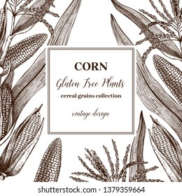 Corn vector design. Hand drawn maize sketches. Detailed vegetarian food illustration. Farm market products. Great for packaging, menu, label. Vintage corn frame template.