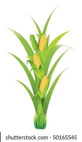 Ilustraciones Imágenes Y Vectores De Stock Sobre Planta