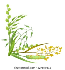 Corner with herbs and cereal grass. Floral design of meadow plants.