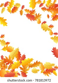 Corners of colorful oak leaf vector frame or border illustration with white background. Autumn foliage, seasonal image. Red, yellow, orange and brown dry oak tree leaves background pattern.