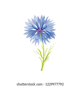 Cornflower flower, floral icon. Realistic cartoon cute plant blossom, spring, summer garden symbol. Vector illustration for greeting card, t shirt print, decoration design. Isolated on white backgroun