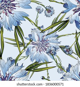 Cornflower flower. Garden, meadow plant cornflower. Seamless vector pattern with flowers.