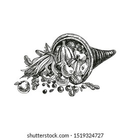 Cornucopia hand drawn vector illustration. Thanksgiving basket with fruits and vegetables. Fall harvest symbol ink pen freehand drawing. Autumn holiday decor sketch design element isolated on white