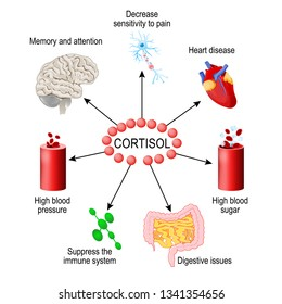Cortisol hormone. functions in the body. It is hormone Released in response to stress and low blood-glucose concentration. Human endocrine system. vector diagram for medical, educational, science use