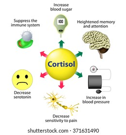 Cortisol is released in response to stress and low blood-glucose concentration.