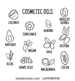 Cosmetic oils. Nuts from which squeeze oils. Nourishing oils for skin beauty. Vector icons