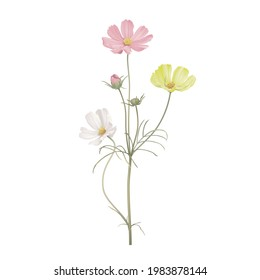 Cosmos flowers in various color with leaves