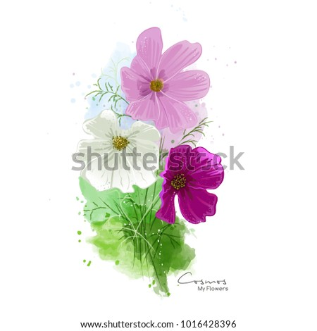 Cosmos flowers watercolor painting