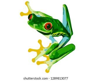 Costa Rica Red Eye Tree Frog - Vector