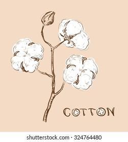 Cotton branch, vector sketch.