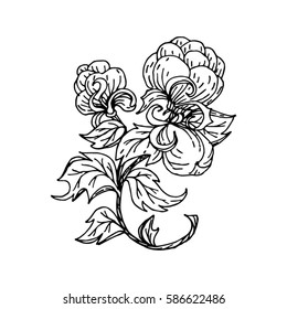 cotton, flower image for Tattoo. Label, decorative element for design. Printing on fabric or mug. Vector illustration, isolated. Linear ink drawing, handmade.