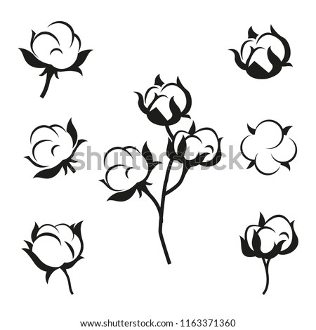 Cotton Flower Plant Organic Ball Fluffy Stock Vector Royalty Free