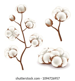 Cotton flowers detailed photo realistic vector set