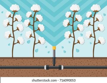 cotton plantation watering flat design