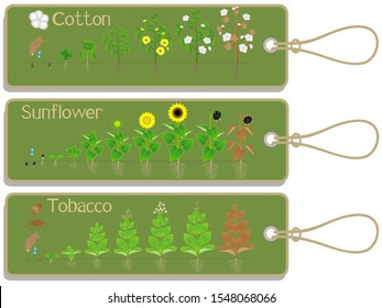 Cotton, sunflower and tobacco plant growth cycle tags.