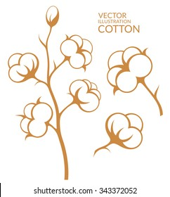 Cotton. Vector illustration. Isolated cotton on white background