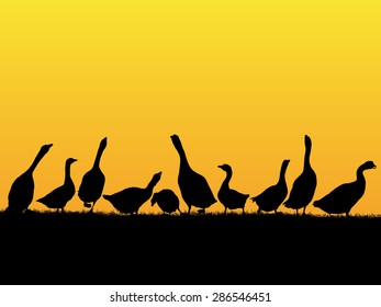 Countryside sunset background with goose and duck silhouettes