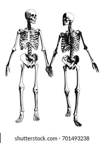 A couple of engraving skeleton in holding hand action illustration on monochrome color background