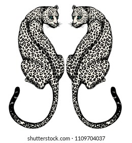 The couple jaguars hand drawn on white background
