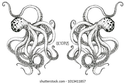 the couple octopus hand drawing.