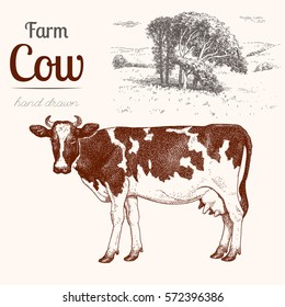 Cow 3. Animal husbandry. Cow and landscape in graphic style from hand drawing image.