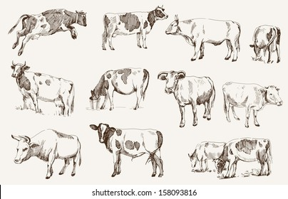 cow. animal husbandry. set of vector elements