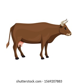 Cow of animal vector icon.Cartoon vector icon isolated on white background cow of animal.