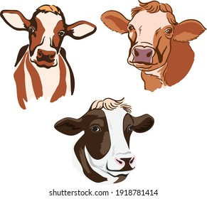 Cow (calf cow) vector drawing for logo or illustration