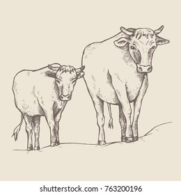 Cow and a calf walk along the road. Sketch style. Bull and calf return one by one from the pasture. Farm animals. Vector illustration.