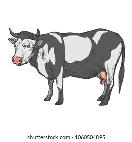 Cow farm animal isolated on white background hand drawn line art stock vector illustration