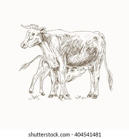 Cow feeding calf sketch. Mom and baby. Sucks milk. Mother and a child vector illustration. Farm pet. Dairy cattle. Farm animals