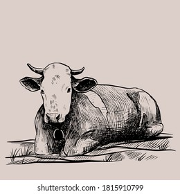 Cow hand drawn in a graphic style. Vintage vector engraving illustration for poster, web, packaging, branding, flyer, print. Isolated on gray background
