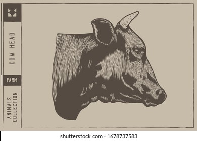 Cow head Vector illustration - Hand drawn - Out line