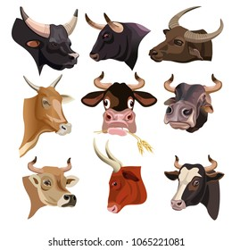 Cow heads set. Vector illustration isolated on white background