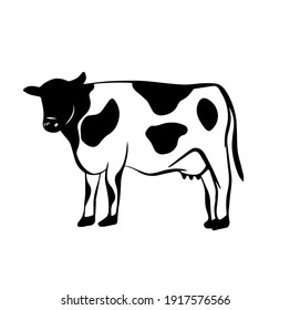 Cow icon logo hand drawn in vector style on white background. Cow illustration in old style