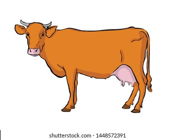 Cow isolated on white background.Vector illustration in cartoon flat design style