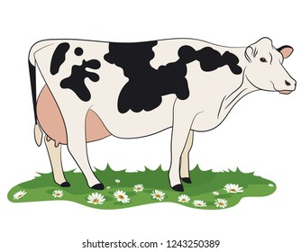 Cow isolated on white, hand drawn vector illustration.
