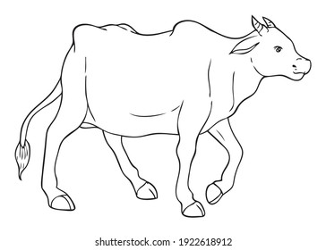 Cow line vector illustration, isolated on white background.Animals top view