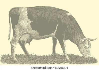 The cow in the meadow. Hand drawn engraving. Vector vintage illustration. Isolated on color background. 8 EPS