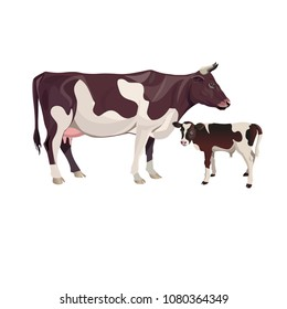 Cow mother with baby calf. Vector illustration isolated on white background