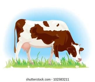 Cow on green field illustration