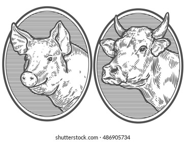 Cow and pig head. Hand drawn sketch in a graphic style. Vintage vector engraving illustration for poster, web. Isolated on white background